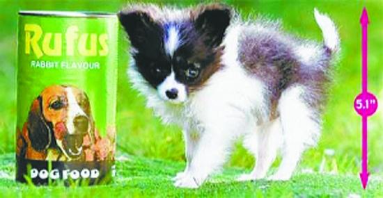 世界上最小的动物