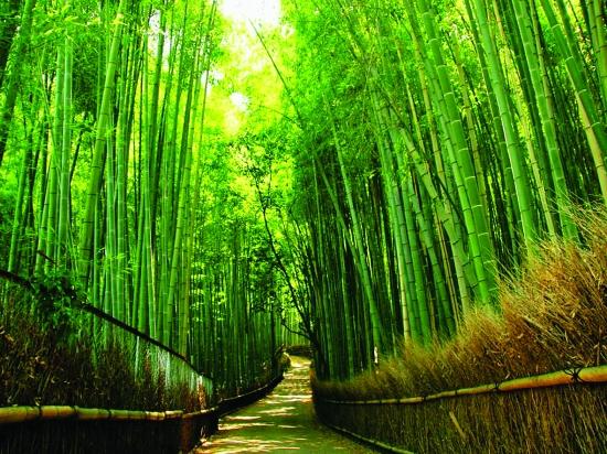 竹林中的溪水分享展示