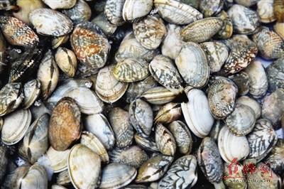金土地市场海鲜水产区销售的花蛤.